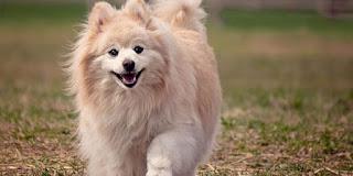 صور كلاب رائعين