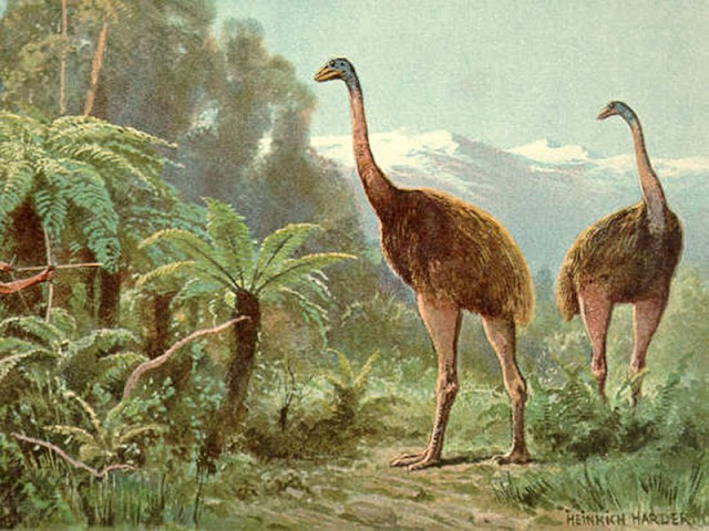 Reconstructing the past from poop: now we know what the little bush moa ate