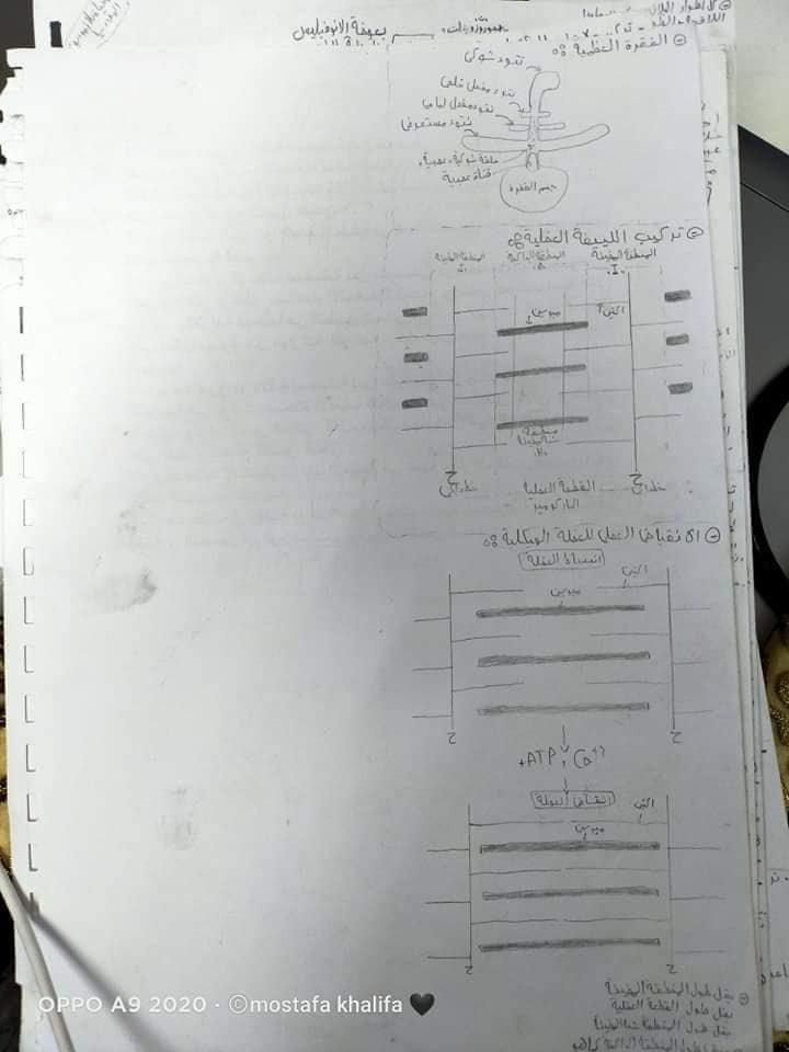 مراجعة كل رسومات مادة الأحياء للصف الثالث الثانوى  0%2B%25287%2529