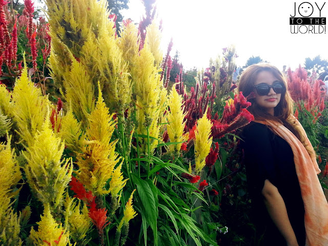 Travel Destination Cebu