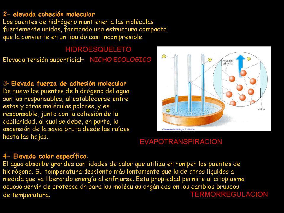 Y La Vida Evolucionó Biomoléculas Inorgánicas Agua 1 2