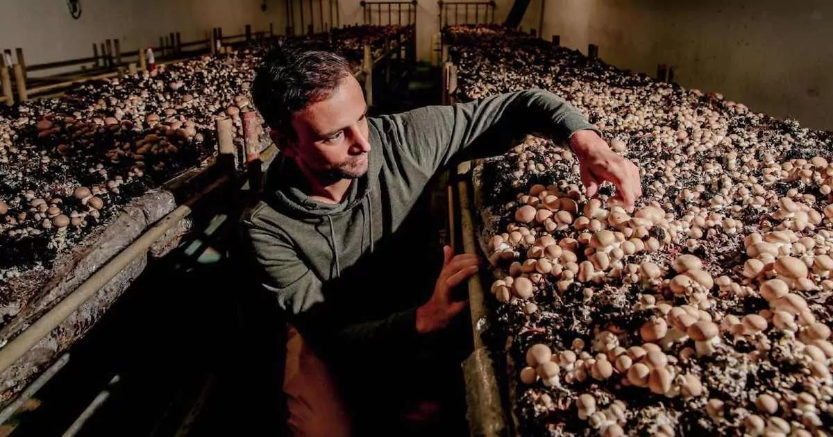 Company In Paris Turns Abandoned Underground Parking-Lots Into Organic Mushroom Farms