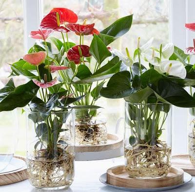 5 Tanaman Indoor Pembersih Udara untuk Rumah Minimalis