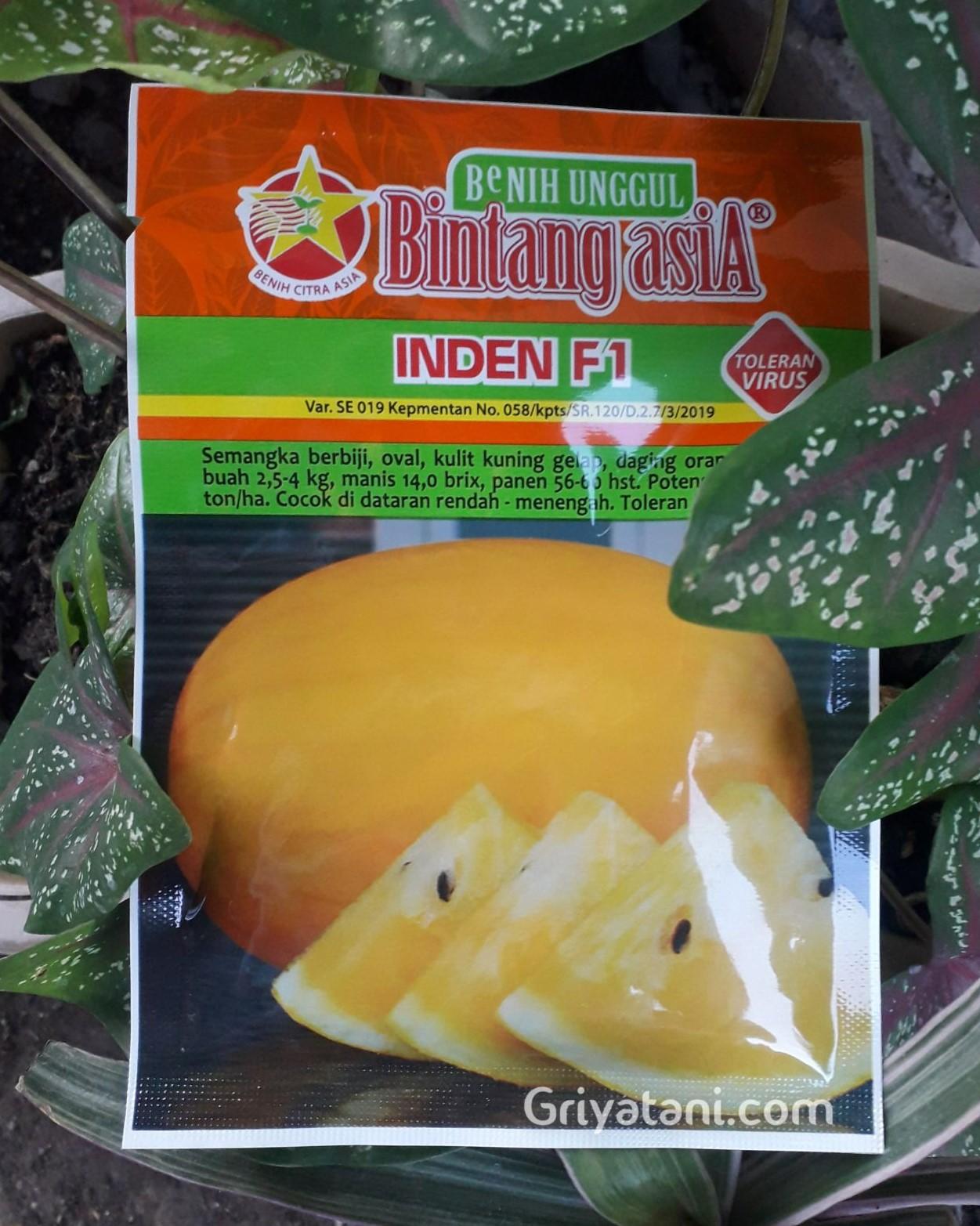 semangka inden