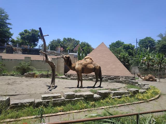 Rekreasi Kebung Binatang Gembira Loka Yogyakarta