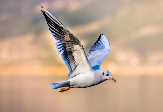 Kenapa burung bisa terbang