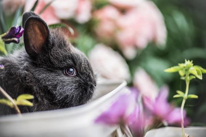 Tips Memulai Pelihara Kelinci Untuk Pemula