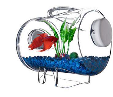 Aquarium Cupan Unik