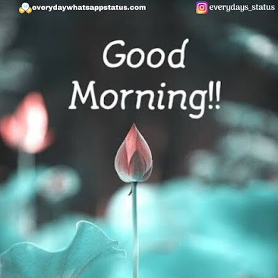 good morning love quotes | Everyday Whatsapp Status | Unique 20+ Good Morning Images With Quotes