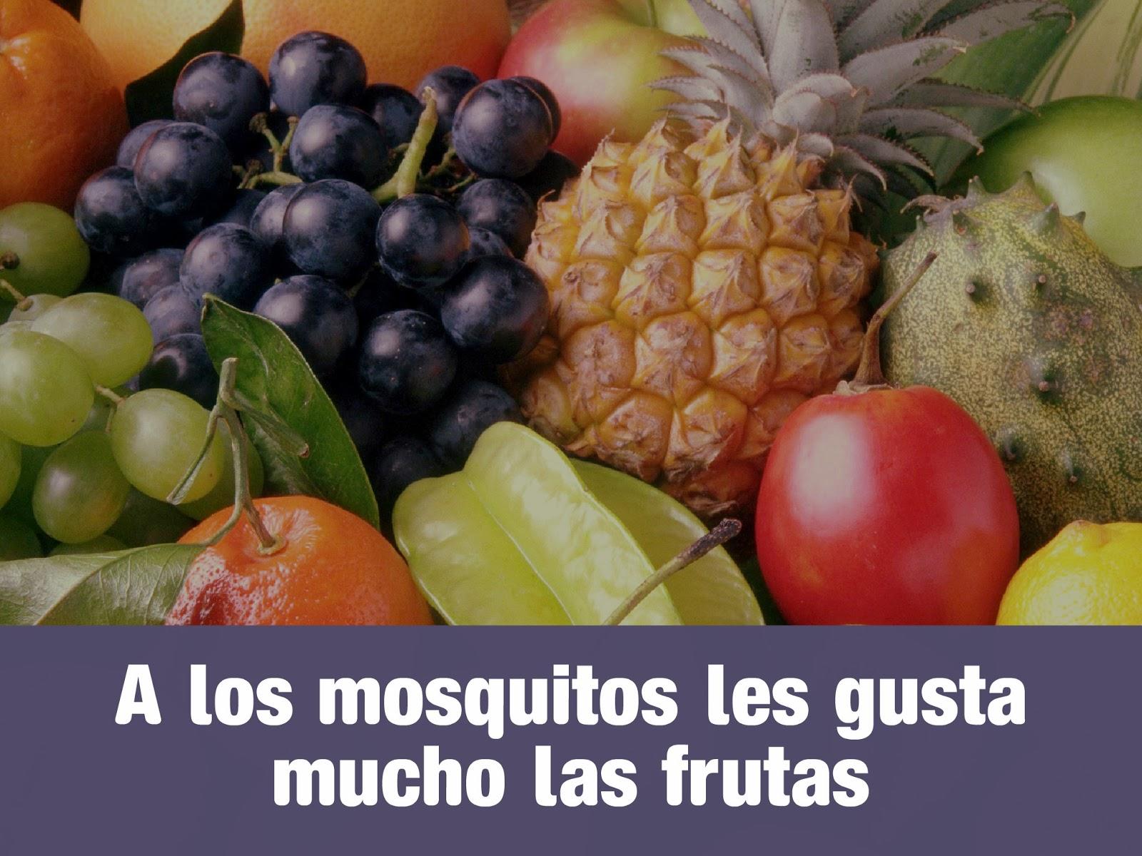 mosquitos-frutas