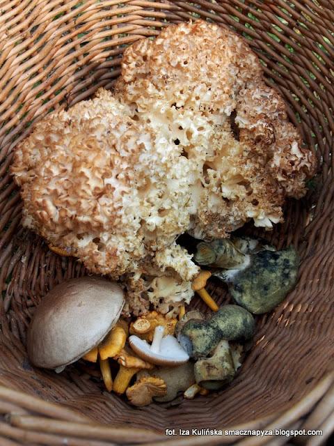grzyby podlasia, jesienne grzybobranie, podlasie 2016, urlop w lesie, na grzyby, grzyby gatunkami, puszcza białowieska