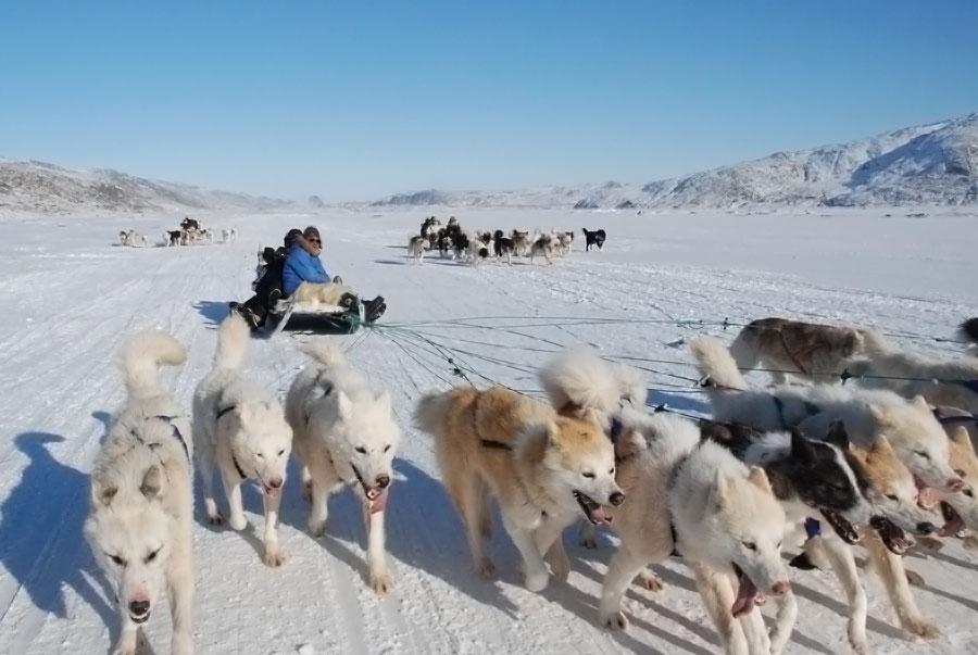 Spise og Rejse: Grønland Hundeslæde og Grønlandsk Kaffe