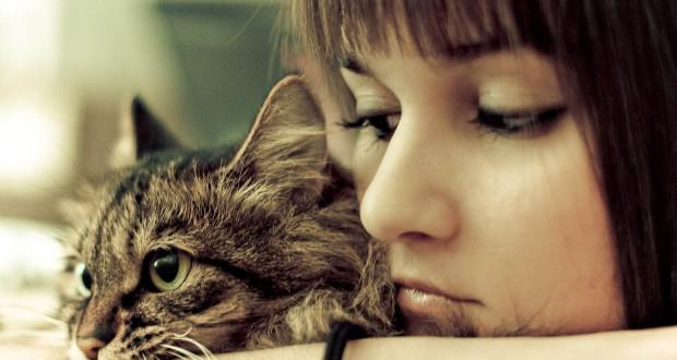 Sabar dalam Menghadapi Kucing