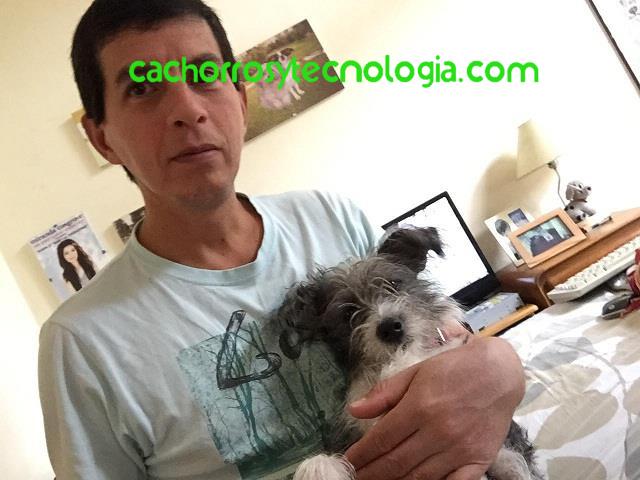 Primeros auxilios para perros y cachorros shurkonrad Peru Argentina España USA