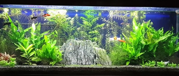 Create an Inexpensive Planted Tank