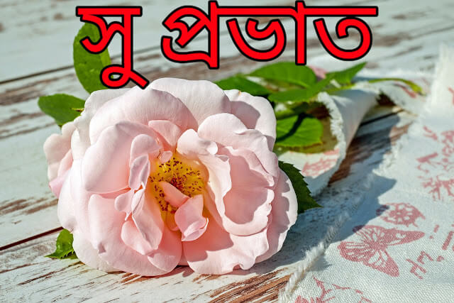 Bengali Good Morning Wishes Images, Wallpaper & Pics শুভ সকাল, সু প্রভাত, Wallpaper Bangla