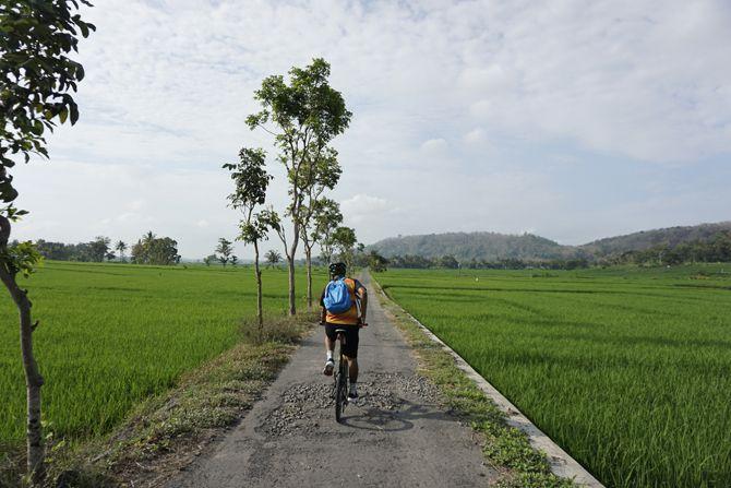 Jalan kecil dengan pemandangan sawah