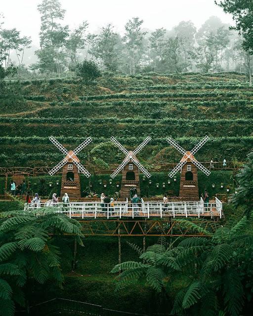 Wisata Kebun Teh Pagilaran
