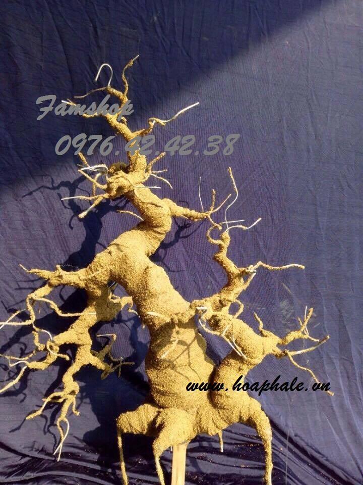 Goc bonsai mai dao the doi tai Le Quy Don