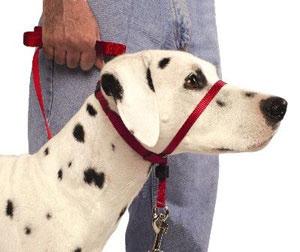 Adestramento de cães grátis online