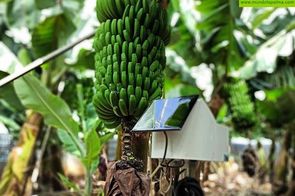 El Cabildo innova en agricultura