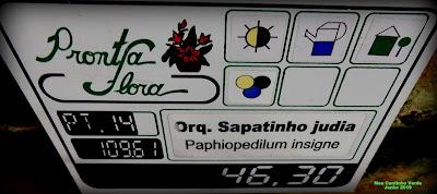 Quanto custa ORQUÍDEA-SAPATINHO - ( Paphiopedilum insigne )