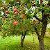 Tοπικά εργαστήρια  3-5 Σεπτεμβρίου για τις παραδοσιακές ποικιλίες και τους δασικούς καρπούς στην Ήπειρο