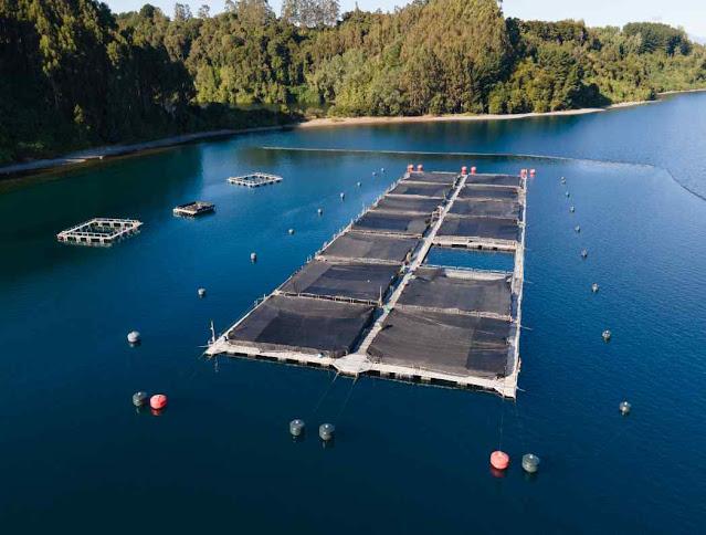 Fazenda de salmão no Chile
