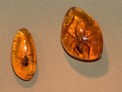 Secular scientists and their lapdog press are all a-twitter about a supposed dinosaur feather found in amber. Apparently, they see what they want to see, and not what is actually found: a bird feather.