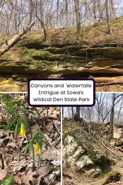 Canyons, Waterfalls, Wildflowers and History at Wildcat Den State Park in Muscatine, Iowa