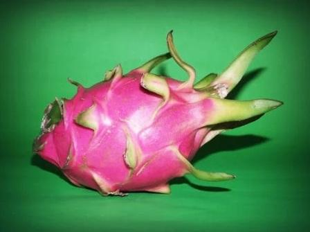 DRAGON FRUIT | BENEFITS OF PURPLE DRAGON FRUIT
