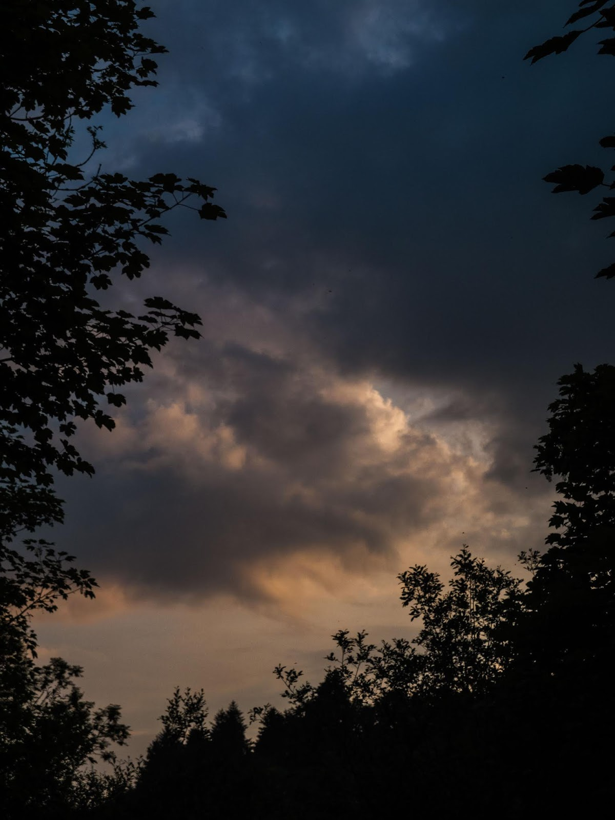 A sunset cloud captured between a mixture of different trees.