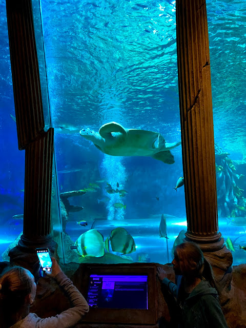 A large sea water tank at the sea life centre with a large green sea turtle