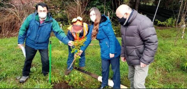 CONAF dona árboles