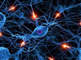 Открыты неизвестные ранее клетки мозга
