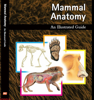 Mammal Anatomy An Illustrated Guide 1st Edition