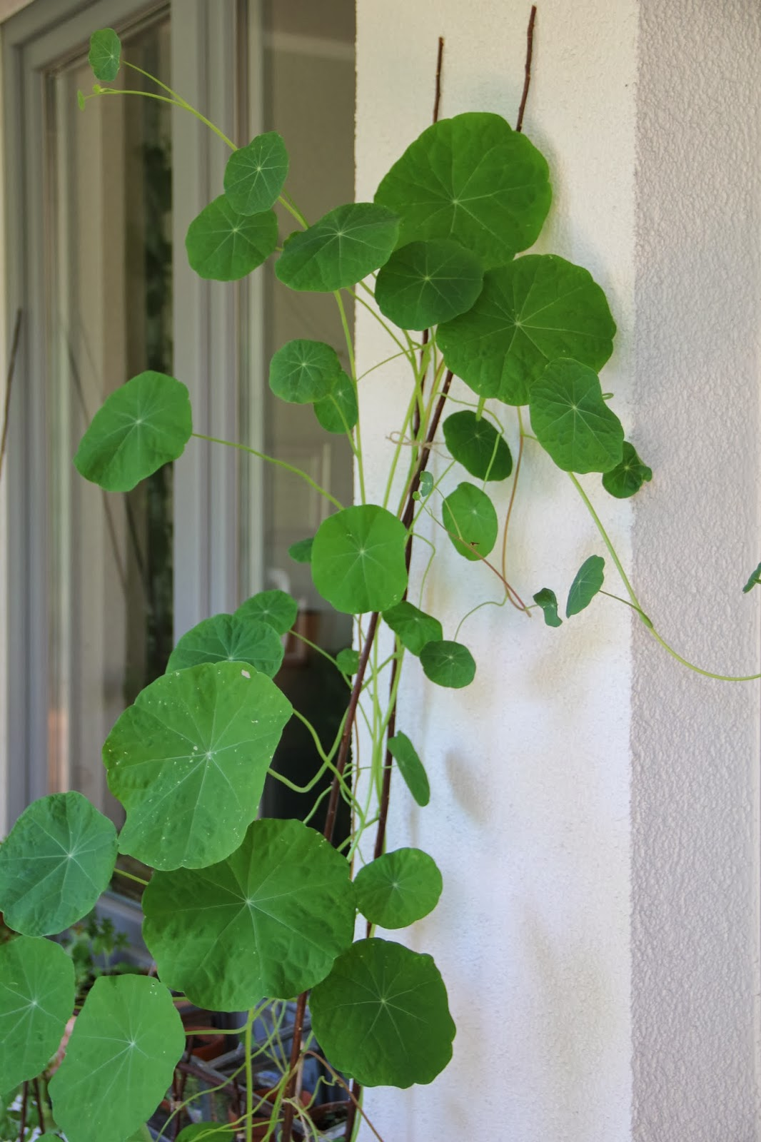 mein balkon salat 2 welche sorten eignen sich f r den. Black Bedroom Furniture Sets. Home Design Ideas