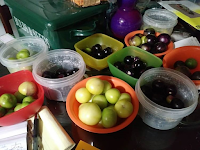 Ten bowls filled with tomatillo fruit. Contents of each bowl are different sizes and/or shades of green and purple.