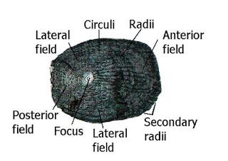 Sisik Cycloid dan Ctenoid