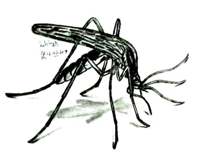 PENCIL DRAWING - MOSQUITO