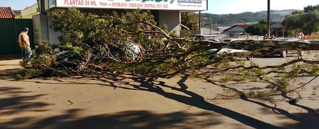 Roncador: Árvore cai e atinge veículo estacionado