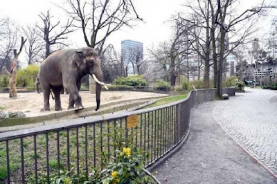 Kebun Binatang Jerman Bangkrut karena Virus Corona