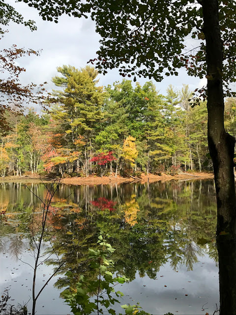 red and yellow leaves over a pond