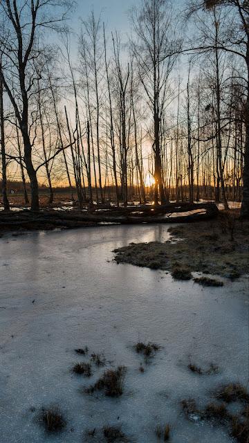 HD wallpaper Dawn, Stream, Ice, trees, nature
