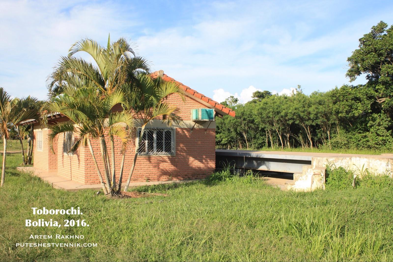 Кирпичный дом и пальма.