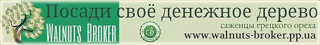 Как купить саженцы грецкого ореха, Идеал, Кочерженко зимой? Интернет магазин Сады Украины