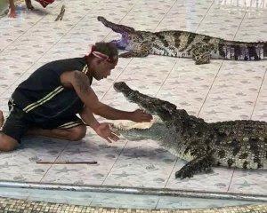 Крокодил вчепився дресирувальнику в руку