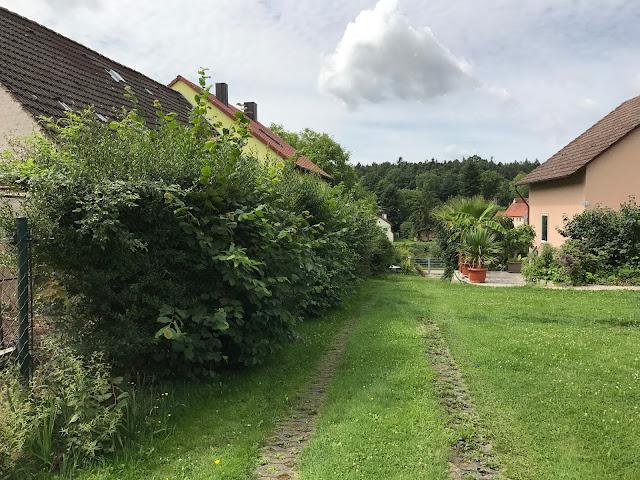 die Hecke vor dem Schnitt (c) by Joachim Wenk