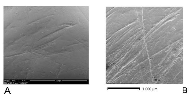 Imágenes de las marcas analizadas: A. Un incisivo de Homo antecessor (Gran Dolina-Atapuerca) y B. un incisivo de preneandertal de la Sima de los Huesos (Atapuerca) - IPHES