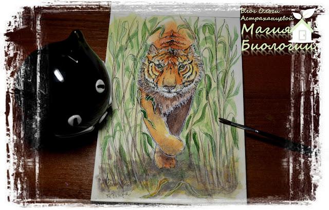 магия-биологии-акварель-бенгальский-тигр